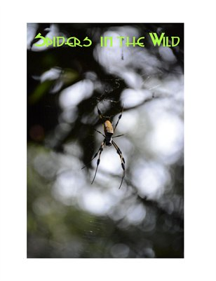 Spiders in the Wild Issue Four