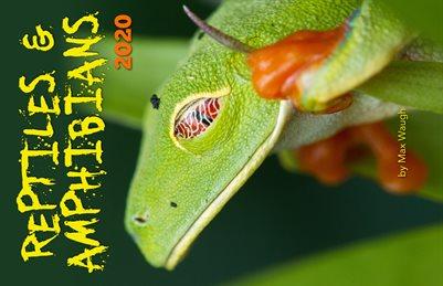 2020 Reptiles & Amphibians Calendar