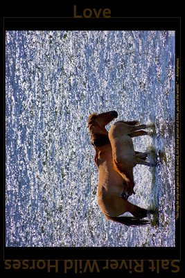 Love - Inspirational Poster - Salt River Wild Horses