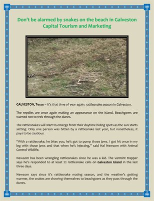Don't be alarmed by snakes on the beach in Galveston Capital Tourism and Marketing