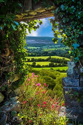 Secret Irish Garden