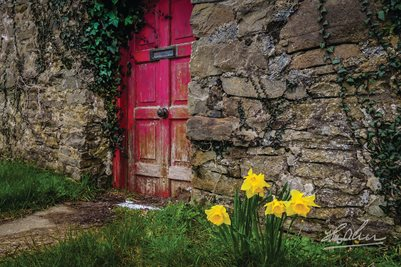 """Daffodils Outside Irish Cottage"" (POSTER)"