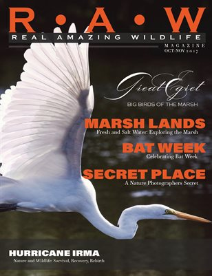 R • A• W | Real Amazing Wildlife Magazine | Oct-Nov 2017