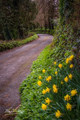 Irish Spring Country Road (POSTER)
