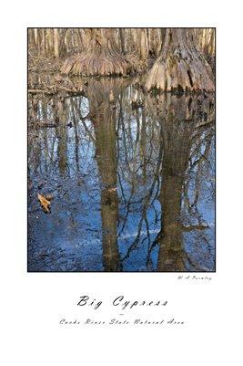 Big Cypress Poster