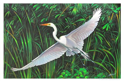 TROPICAL FLORIDA ART - VENICE EGRET 11