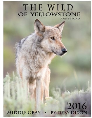 Wildlife of Yellowstone and beyond