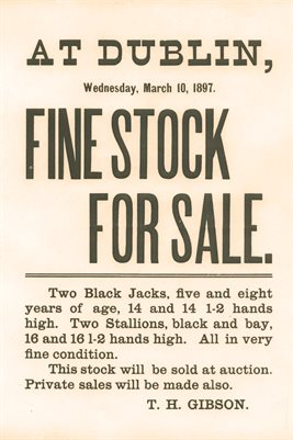 1897 Dublin Fine Stock For Sale, Thomas Henry Gibson