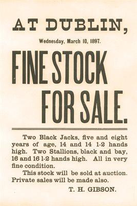 1897 Dublin Fine Stock For Sale, Thomas Henry Gibson