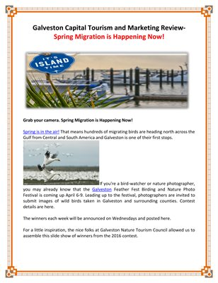 Galveston Capital Tourism and Marketing Review- Spring Migration is Happening Now!