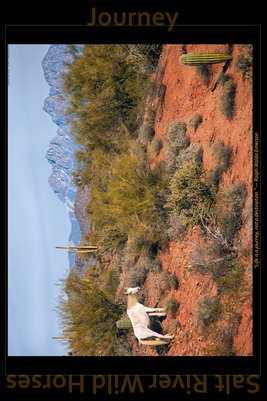 Journey - Inspirational Poster - Salt River Wild Horses