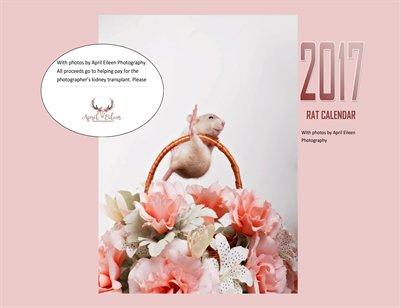 2017 Rat Calendar