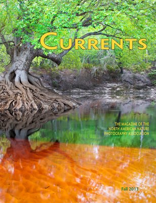 2013 Fall Currents