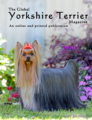 The Global Yorkshire Terrier Magazine -MAY 2017