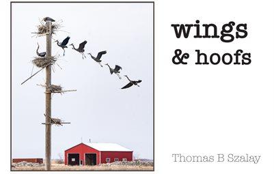 Wings & hoofs