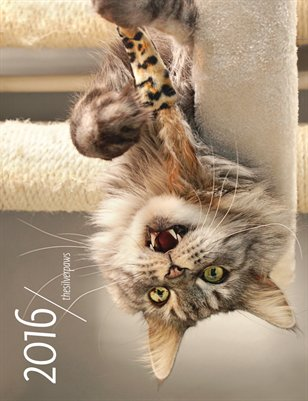 thesilverpaws cat calendar 2016