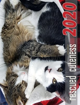Rescued Cuteness: 2020 Calendar for Cat Lovers