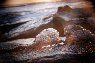 Pearl At Sunrise
