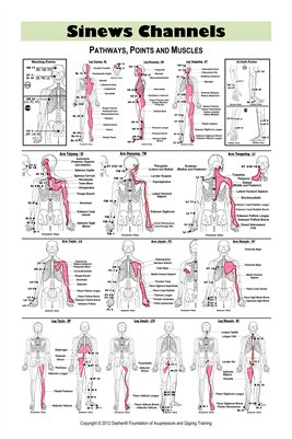 Sinews Channels Acupuncture Poster (Double Sided)