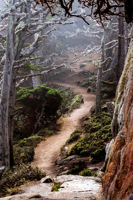 Enchanted Path