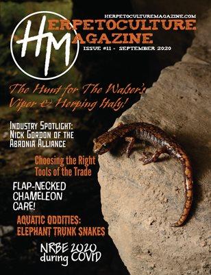 Issue #11 - September 2020