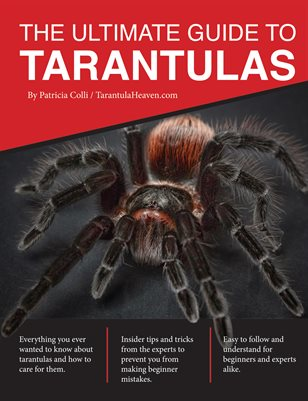 The Ultimate Guide To Tarantulas