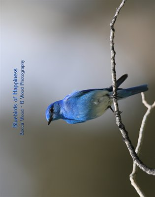 2015 Bluebirds of Happiness 11x14 Calendar