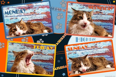 New Publication: Funny Cat Poster