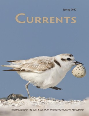 Currents Spring 2012