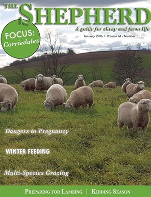 The Shepherd January 2016