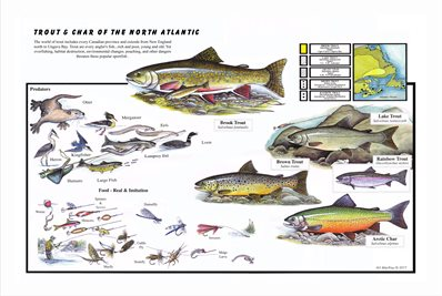 Trout and Char of the North Atlantic