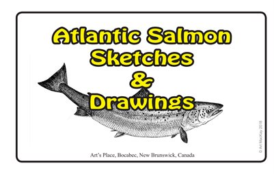 Atlantic Salmon Sketches & Drawings