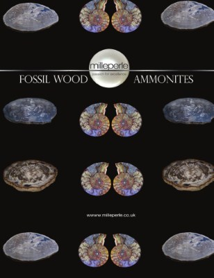 Fossil wood and Ammonites,
