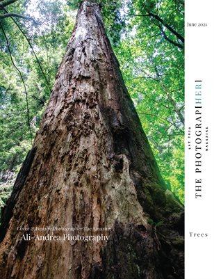 Trees | June 2021