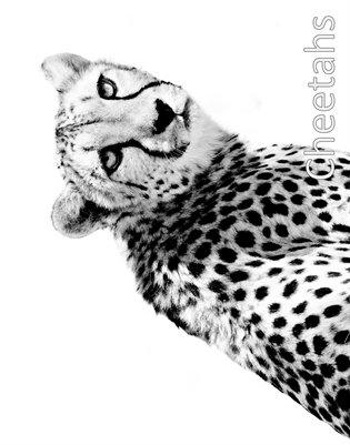 Cheetahs 2014 Calendar
