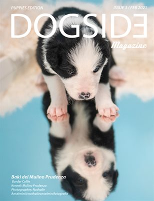 Dogside 3