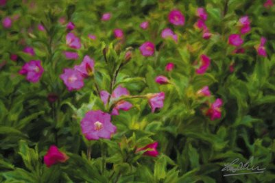 """Great Willowherb Blossoms in the Irish Countryside"" (POSTER)"
