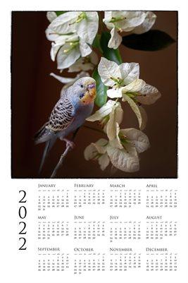 2022 Poster Calendar J Parakeet