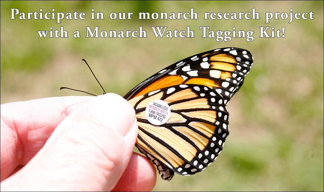 Participate in our monarch research project with a Monarch Watch Tagging Kit!
