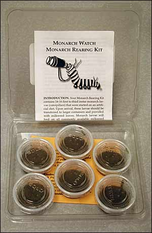 Monarch Rearing Kit