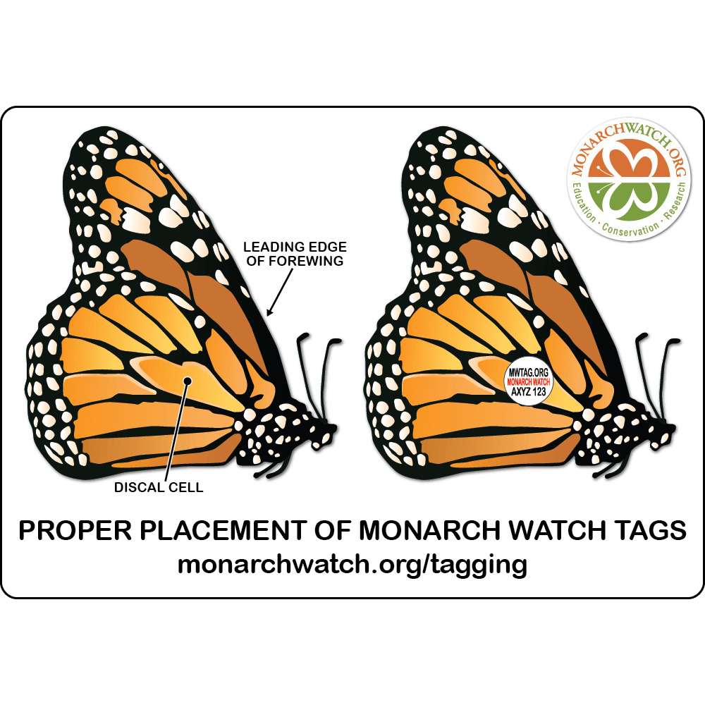 Monarch Watch Tagging Kit - 121239