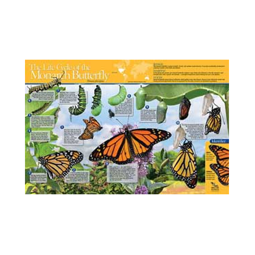 Monarch Watch The Life Cycle of the Monarch Butterfly Poster