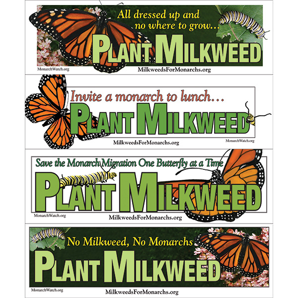 Monarch Watch Bumperstickers monarch and milkweed stickers, milkweed stickers, save the monarch bumper sticker, plant milkweed bumper sticker, no milkweed no monarchs
