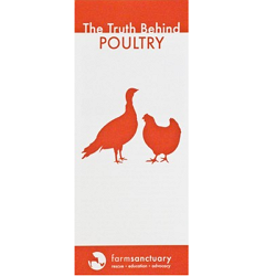 The Truth Behind Poultry Brochure