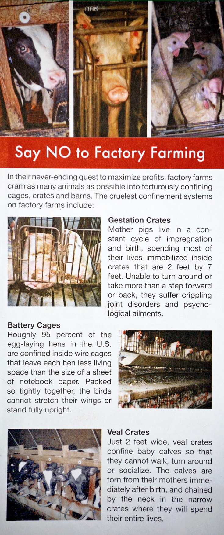 Say NO to Factory Farming Leaflet