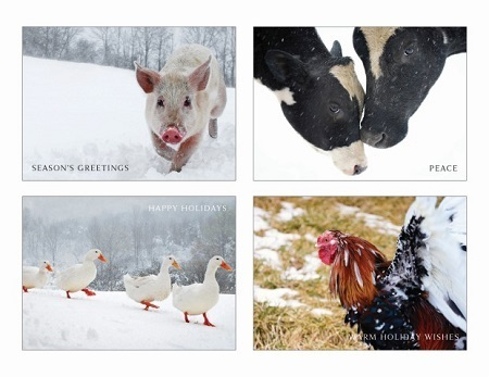 2012 Sanctuary Holiday Cards - 200111-12