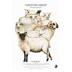 Counting Sheep Fine Art Print