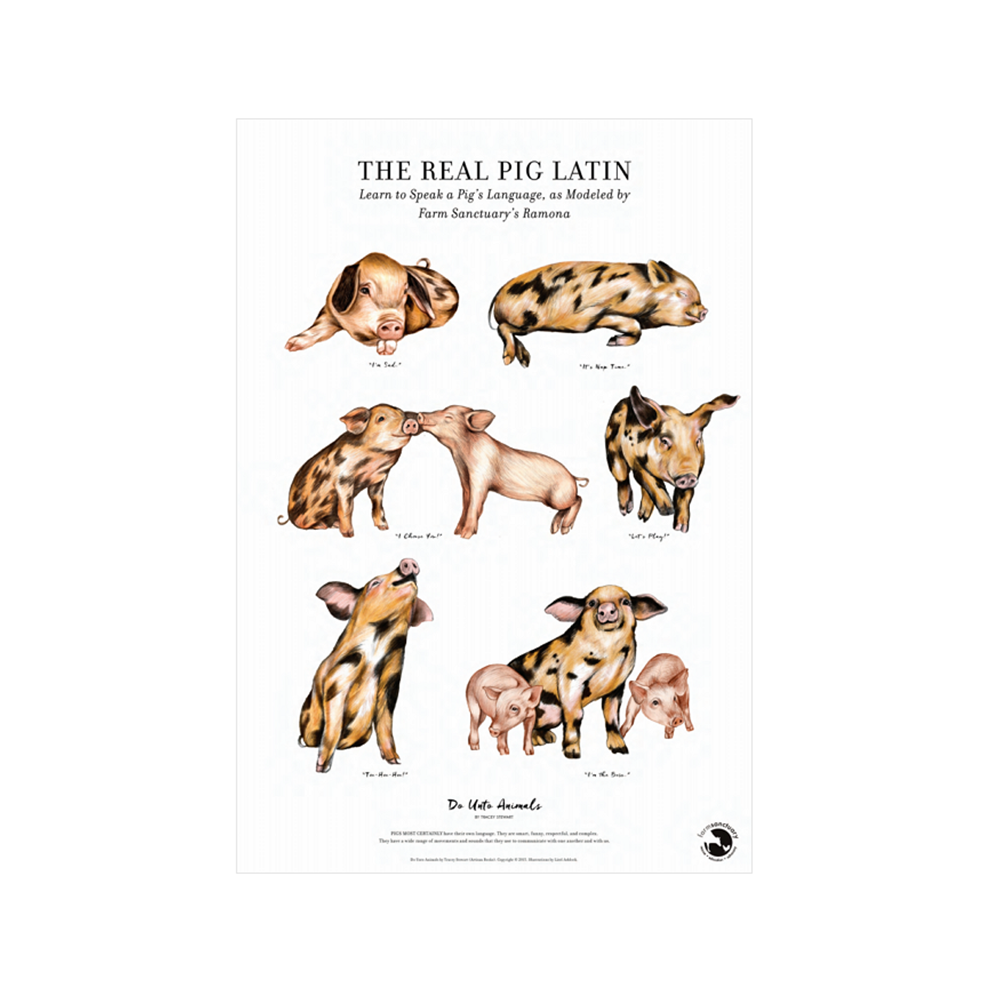 The Real Pig Latin Poster Print by Tracy Stewart and Farm Sanctuary