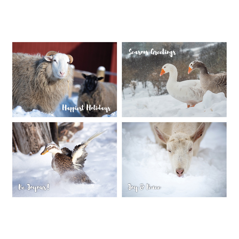 Farm Sanctuary 2019 Holiday Cards
