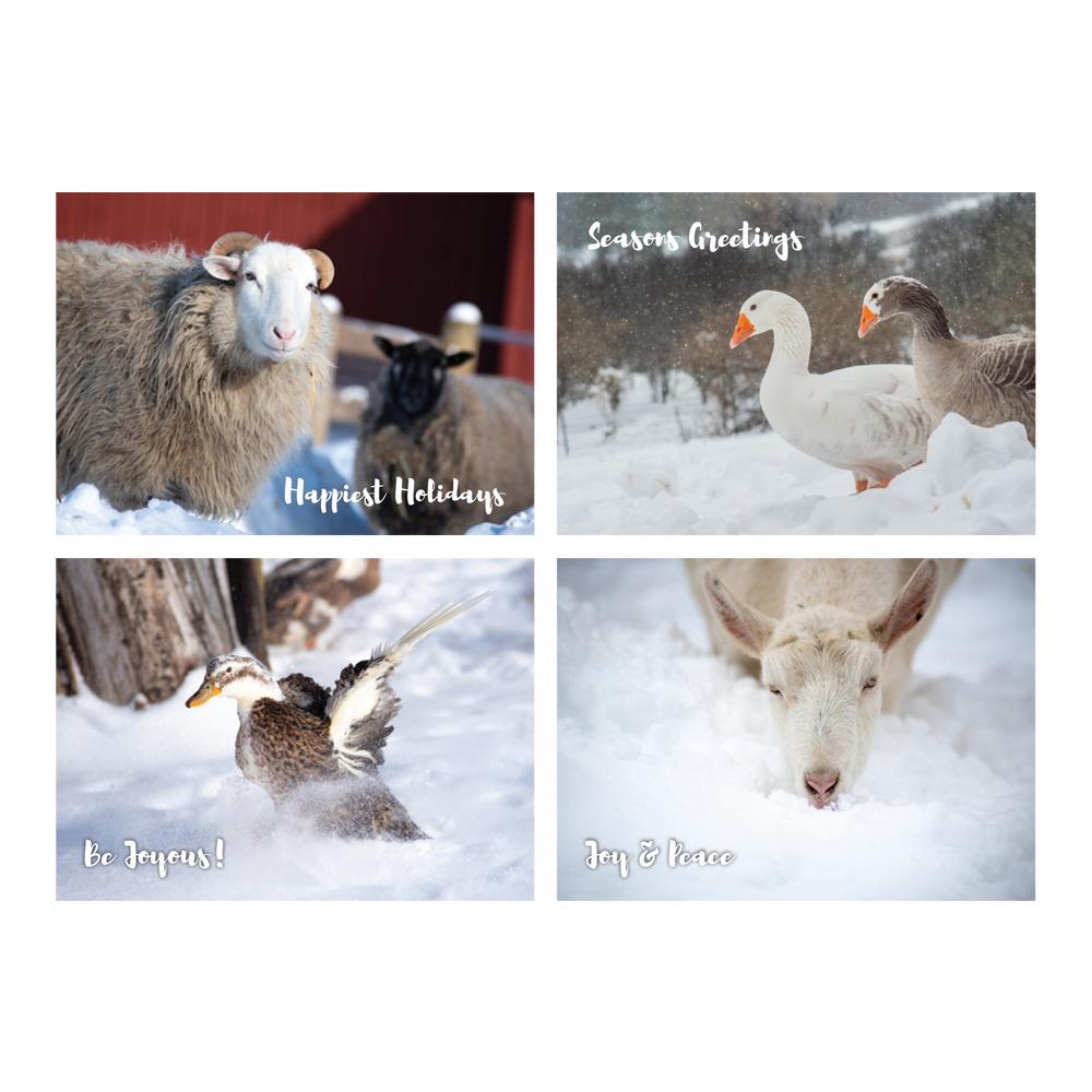 Farm Sanctuary 2019 Holiday Cards